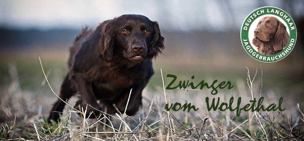 Deutsch Langhaar;    Zwinger vom Wolfethal